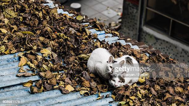 High Angle View Of Cats Sitting On Dry Leaves Over Roof