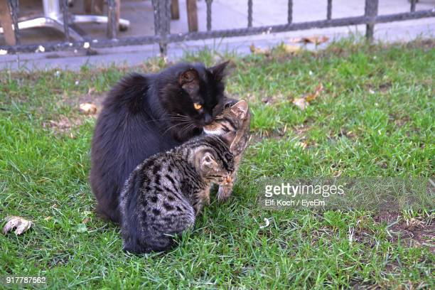 High Angle View Of Cats Sitting On Grassy Field