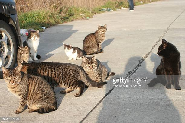 High Angle View Of Cats Sitting On Street By Car