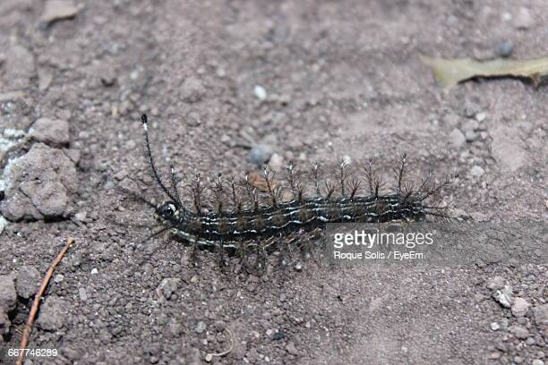 high angle view of centipede on field - centipede stock pictures, royalty-free photos & images