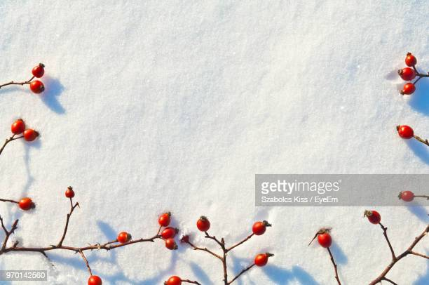 high angle view of cherries on snow covered field - cherry kiss photos et images de collection