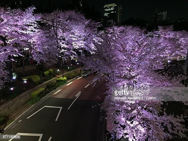 High Angle View Of Cherry Blossom Tree By Street At Night