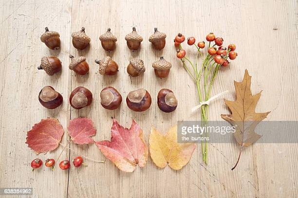 High angle view of chestnuts, acorns, rose hips and leaf on wooden table