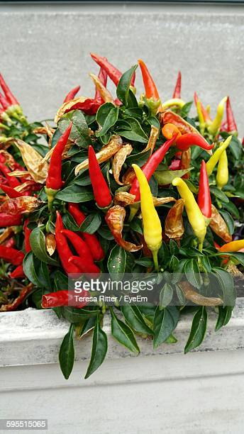 High Angle View Of Chili Peppers Growing On Plant