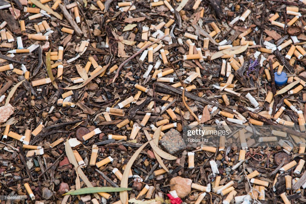 High angle view of cigarette butts on ground : Stock Photo