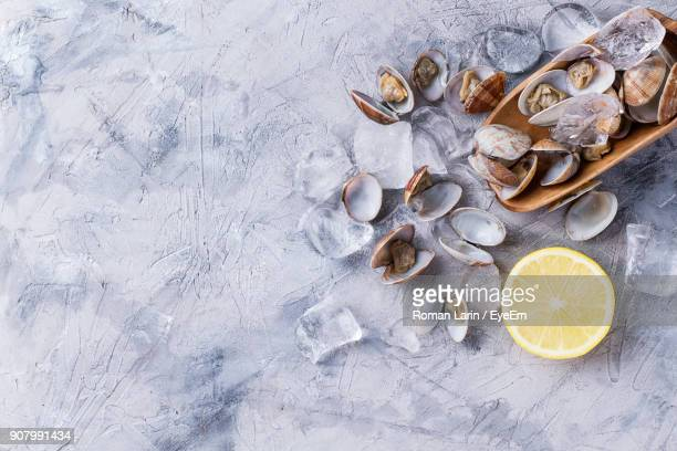 high angle view of clams with ice cubes and lemon on marble - seafood stock pictures, royalty-free photos & images