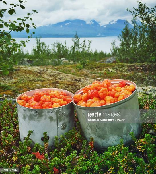 High angle view of cloudberries in box