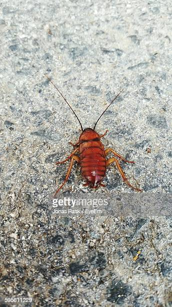 High Angle View Of Cockroach On Rock
