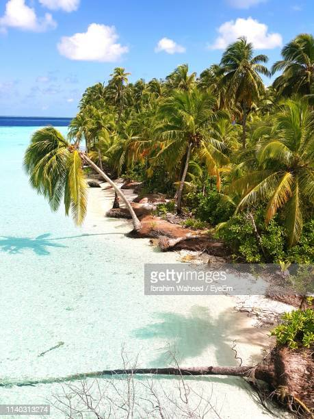 high angle view of coconut palm trees at beach - océan indien photos et images de collection