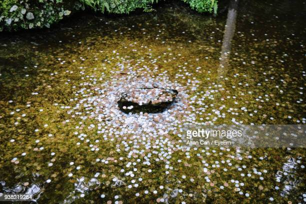 High Angle View Of Coins In Water
