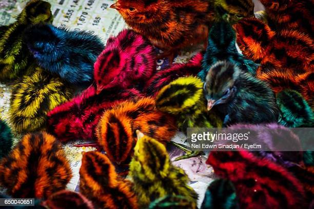 high angle view of colorful chickens - large group of animals stock pictures, royalty-free photos & images