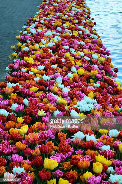 High Angle View Of Colorful Flowers Arranged On Lake