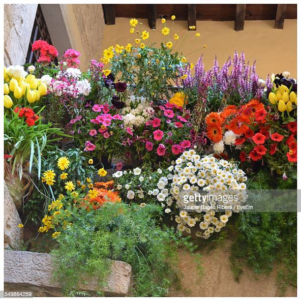 High Angle View Of Colorful Flowers In Lawn