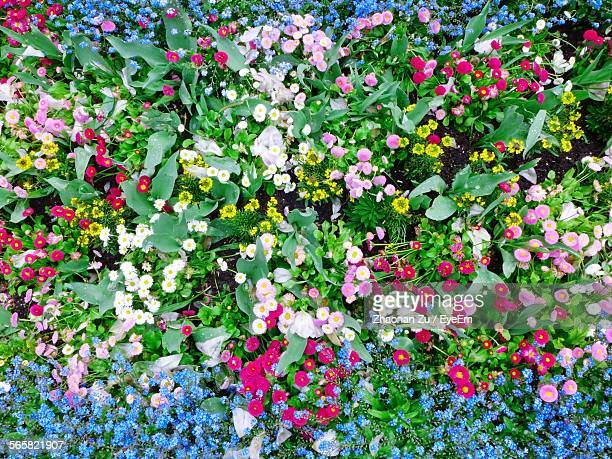 High Angle View Of Colorful Flowers