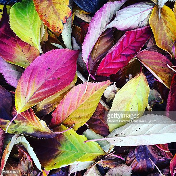 High Angle View Of Colorful Leaves Fallen On Field During Autumn