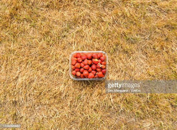 high angle view of container of strawberries in field - 麦わら ストックフォトと画像