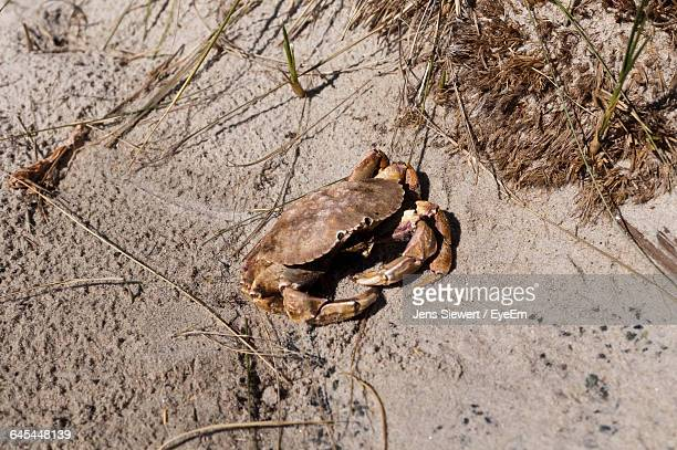High Angle View Of Crab At Beach