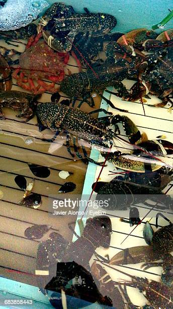 high angle view of crabs and lobsters in water - javier alonso fotografías e imágenes de stock