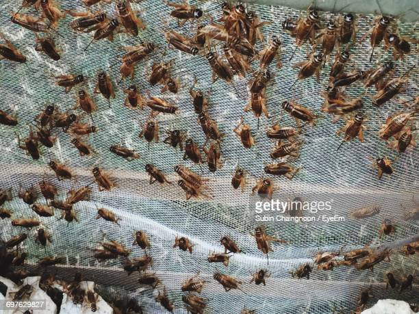 High Angle View Of Crickets On Net