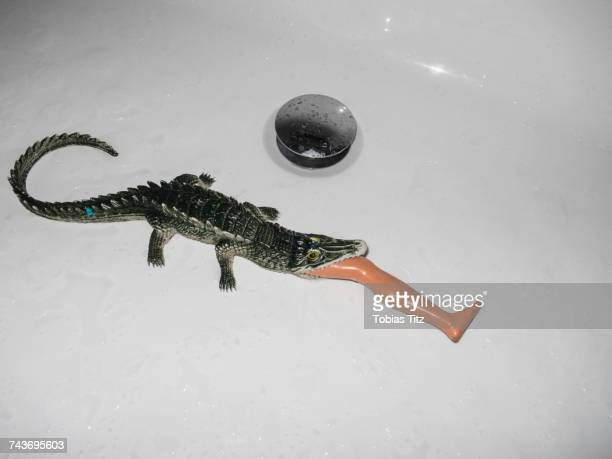 High angle view of crocodile toy eating plastic leg in white sink