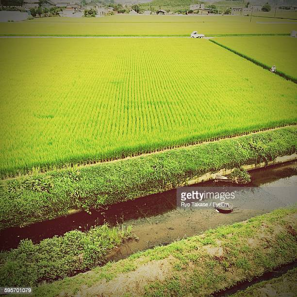 High Angle View Of Crop Growing On Field