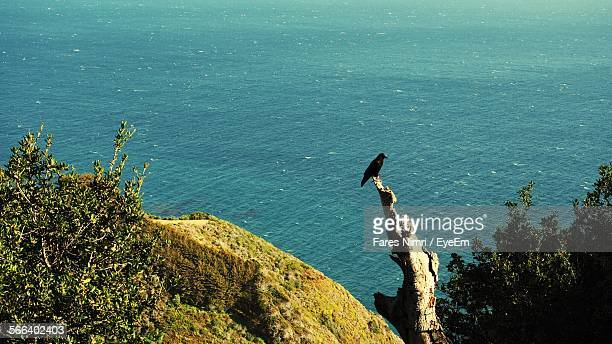 High Angle View Of Crow Perching On Log Against Sea