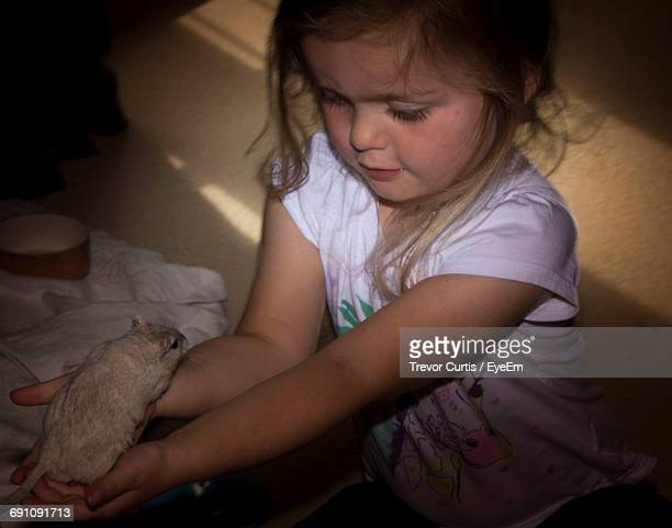 high angle view of cute girl holding gerbil while sitting at home - gerbil stock pictures, royalty-free photos & images