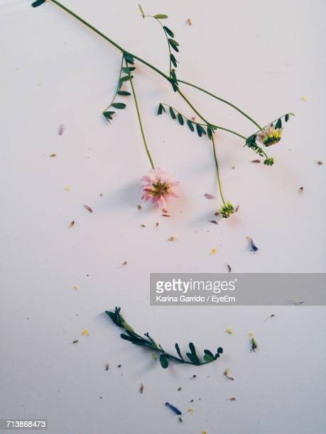 High Angle View Of Damaged Flowers On Table