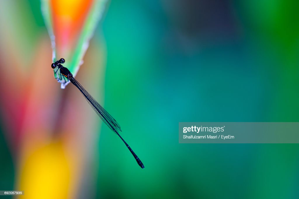 High Angle View Of Damselfly On Leaf : Stock Photo