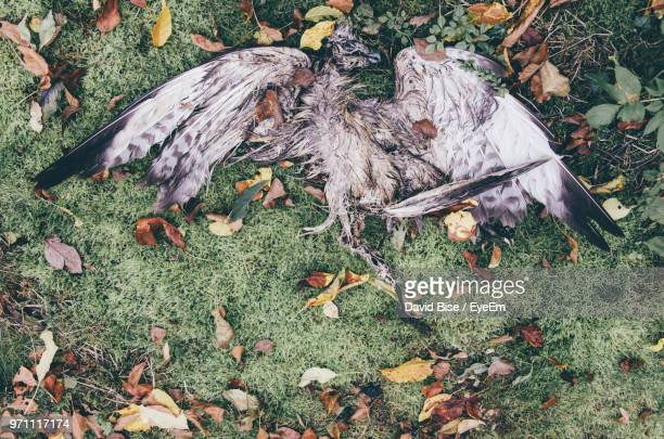 High Angle View Of Dead Bird On Field