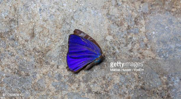 High Angle View Of Dead Butterfly On Concrete