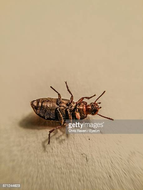 high angle view of dead cockroach on floor - dead raven stock photos and pictures