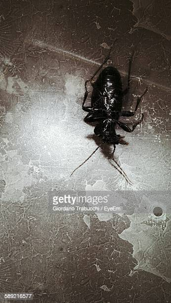High Angle View Of Dead Cockroach