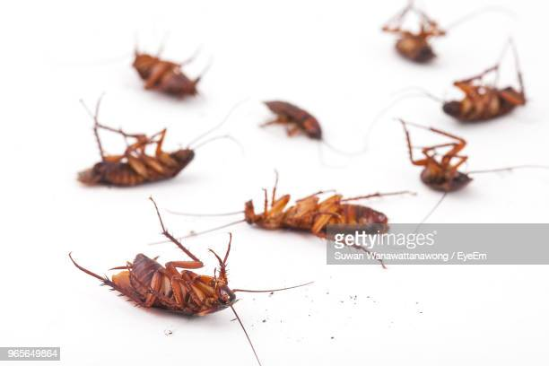 high angle view of dead cockroaches on white background - cockroach stock photos and pictures