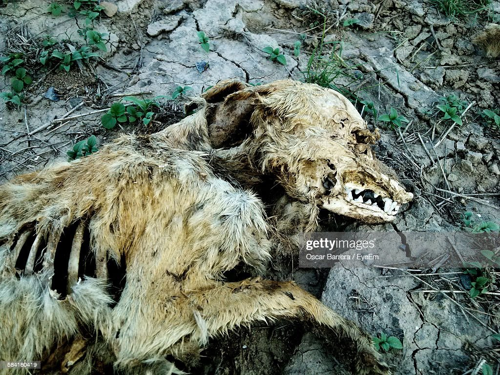 High Angle View Of Dead Dog On Rock : Stock Photo