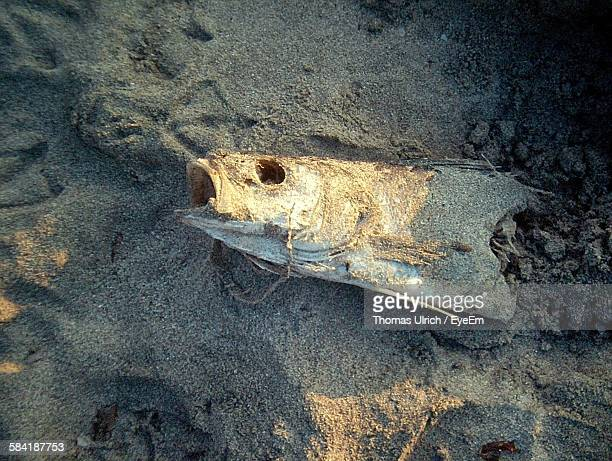 High Angle View Of Dead Fish On Sand At Beach