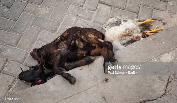high angle view of dead goat and hen outdoors - dead animal stock pictures, royalty-free photos & images