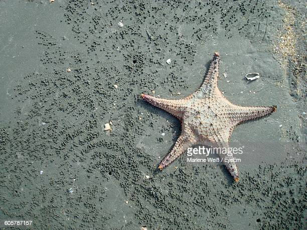 high angle view of dead starfish on sand at beach - weiß stock pictures, royalty-free photos & images