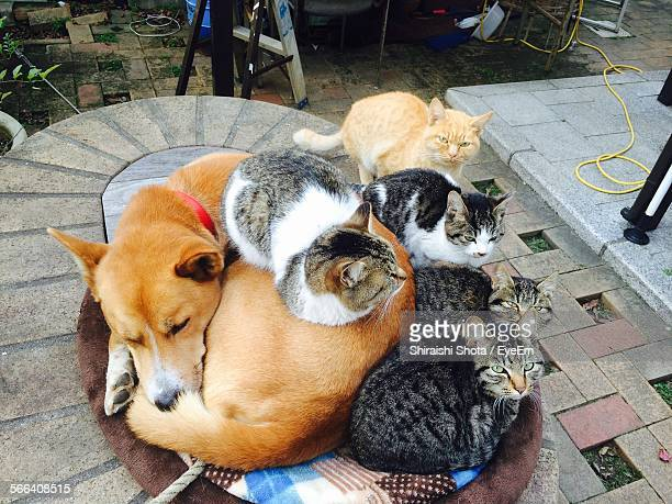 High Angle View Of Dog And Cats Relaxing On Walkway