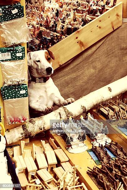 High Angle View Of Dog At Market During Christmas