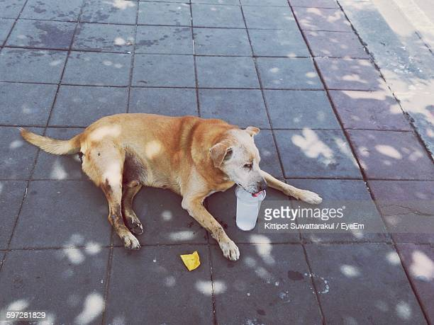 High Angle View Of Dog Drinking Water On Footpath
