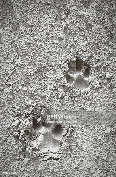 High Angle View Of Dog Footprints On Beach