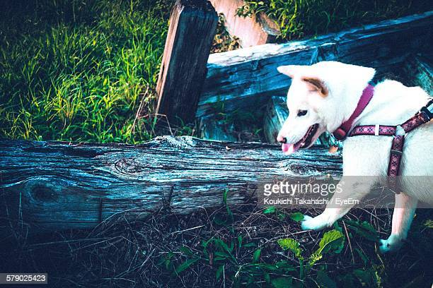 High Angle View Of Dog In Forest