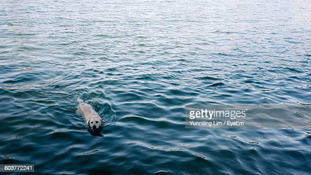 High Angle View Of Dog In Rippled Sea