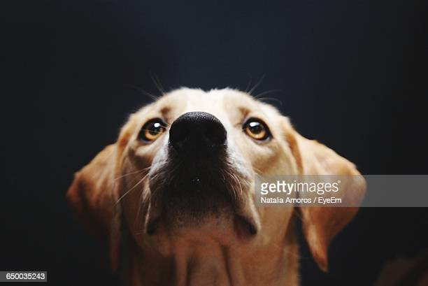 high angle view of dog looking at camera - animal whisker stock pictures, royalty-free photos & images