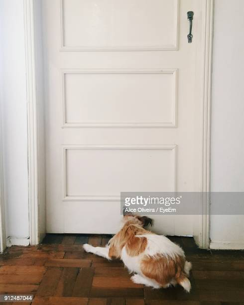 High Angle View Of Dog Lying At Doorway