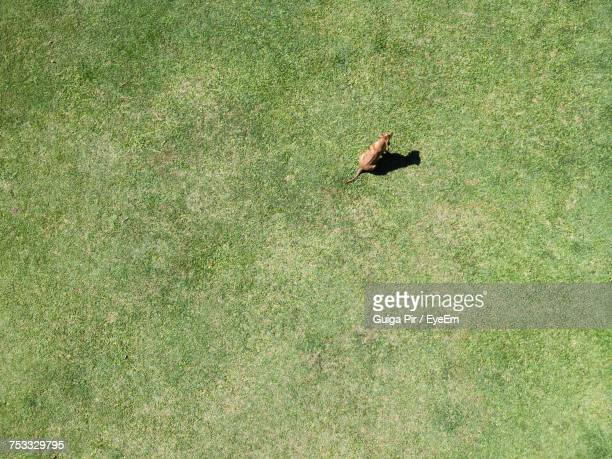 high angle view of dog on field - elevated view ストックフォトと画像