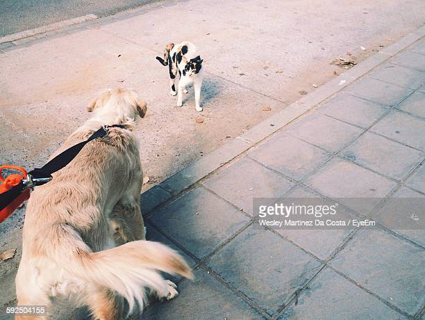 High Angle View Of Dog On Footpath By Cat