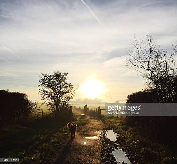 high angle view of dog on footpath during sunrise - hartford connecticut stock pictures, royalty-free photos & images