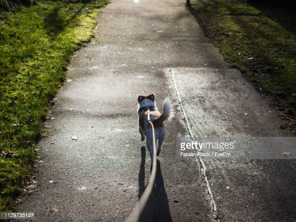 high angle view of dog on leash on road - point of view stock pictures, royalty-free photos & images